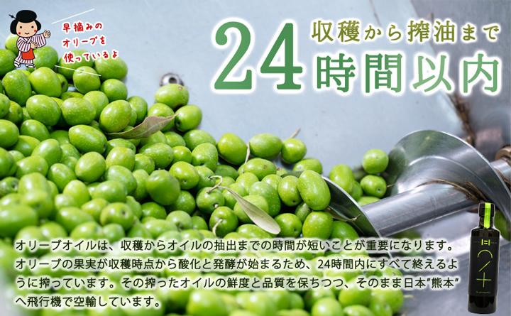 オリーブ油7説明